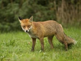 fox_7992048141_o