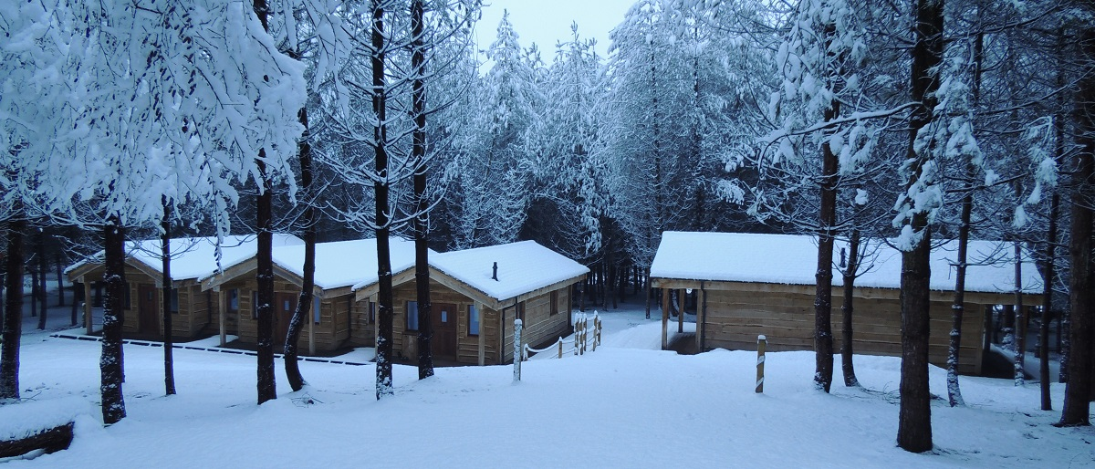Wyldwood Cabins in the Snow